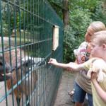 Hendrik im Tierpark